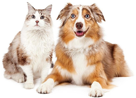 Pet Supplies | Pet Health Care Products | BudgetPetSupplies
